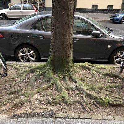 zauberhaft verwurzelte Baumscheibe
